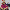 Gazişehir Gaziantep FK - Beşiktaş maçının ardından