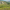 Ege Orman Vakfı'nın diktiği fidan sayısı 9 milyonu geçti
